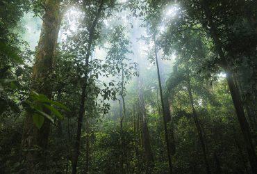 regenwald schuetzen